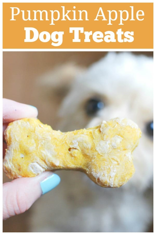 Homemade Pumpkin Apple Dog Treats - healthy homemade treats for you pup! Only simple ingredients and so easy.