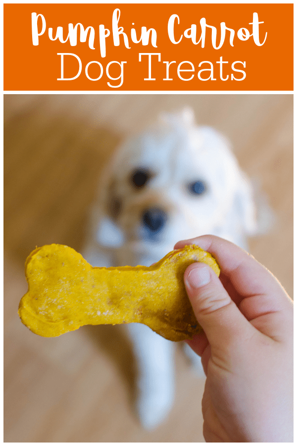 Pumpkin Carrot Dog Treats - homemade dog treats made with pumpkin puree and shredded carrots. Your pup is going to love these!