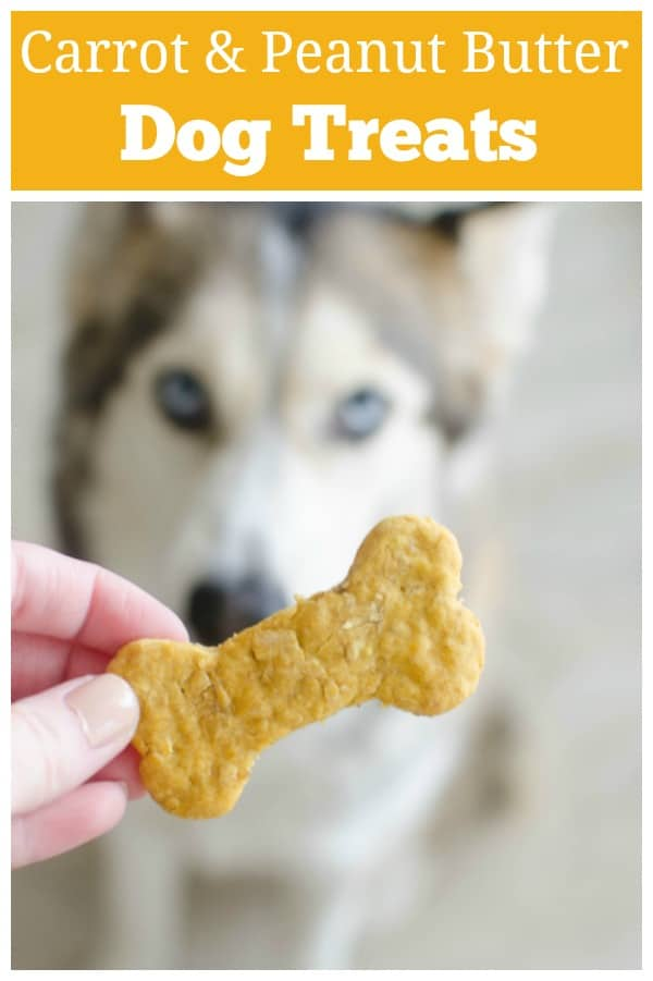Carrot, Peanut Butter, and Oats Dog Treats recipe - your dog deserves a treat! These homemade dog treats are packed with carrots, peanut butter, and oats - all things your pup is going to love!